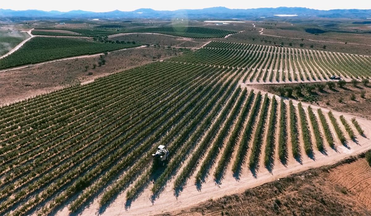 El aceite de oliva de Almería extra Cool reconocido por su calidad.
